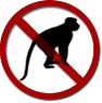no monkeys